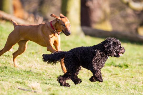Dog Training & Socialization