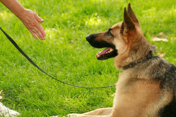 basic dog training and advanced dog training