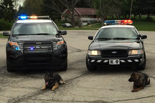 Police & Military Dog Training