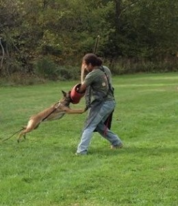 Antonio Training a German Shepherd